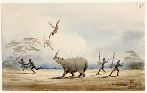 Charles Bell - Rhinoceros (1)