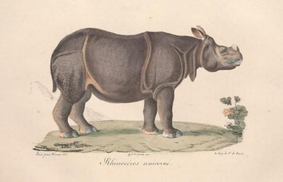 Cuvier Mammiferes: unicorne 1