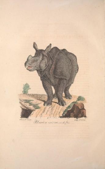 Cuvier Mammiferes unicorne 2