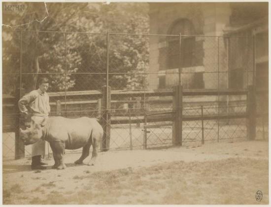 Paris Jardin des Plantes 1885