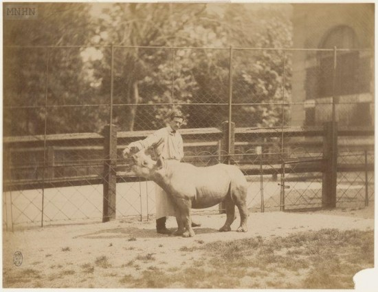 Paris black rhino 1885