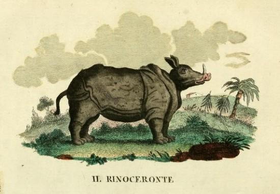 Rinoceronte 1826