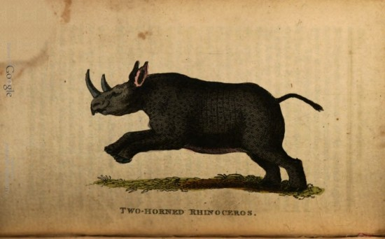 Two Horned Rhinoceros 1803