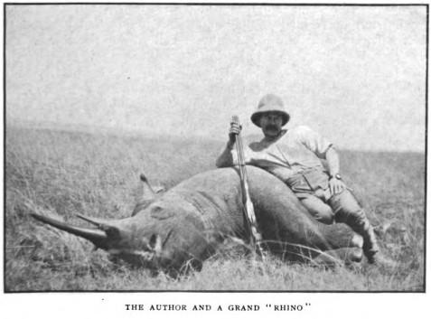 Lechmere rhino