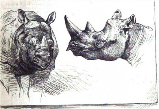 Rhinos in Berlin 1874
