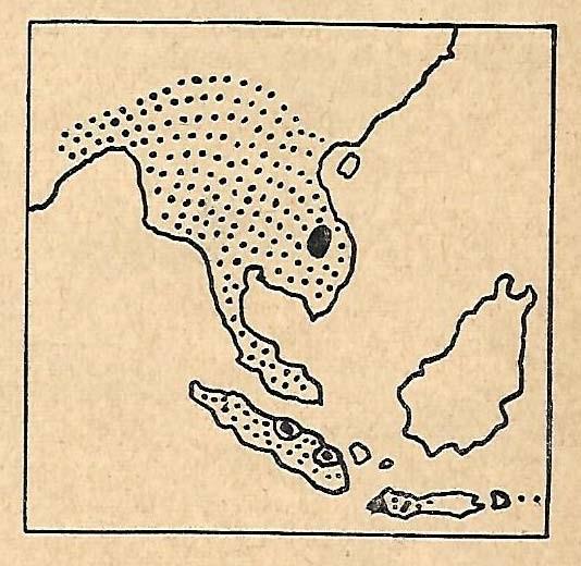 Range of D.sumatrensis