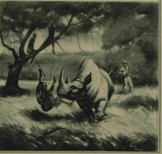 Raoul Millais on black rhino