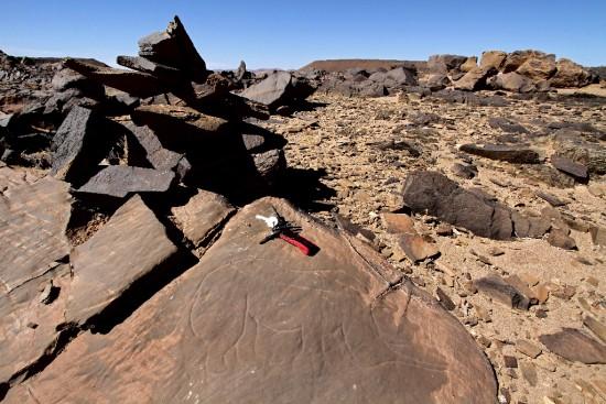 A rhinoceros engraved on a rock at Akka (Morocco)