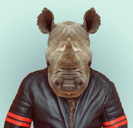A sports rhinoceros