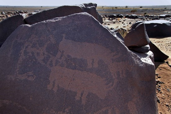 A triptych of rhinoceroses engraved on a rock in Morocco