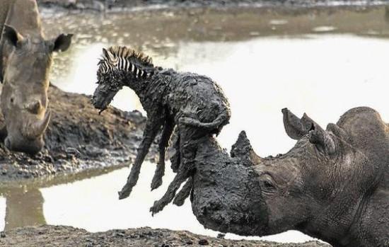 Animal kingdom shows us true compassion