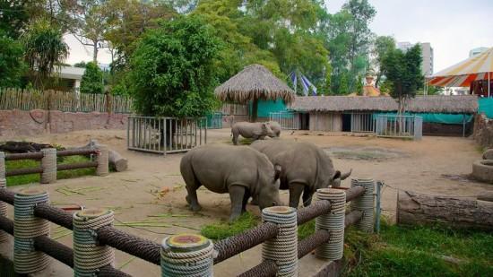 Rhinoceroses at the Saigon Zoo