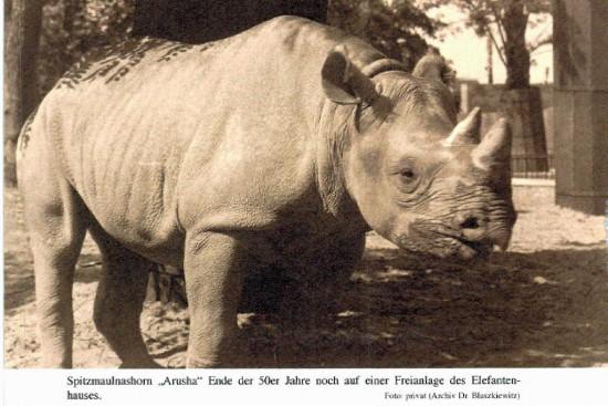 Black rhino in Berlin 1954-1976
