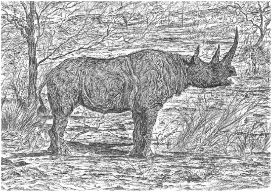 Stephanorhinus kirchbergensis (Jäger) in an arctic-Siberian habitat