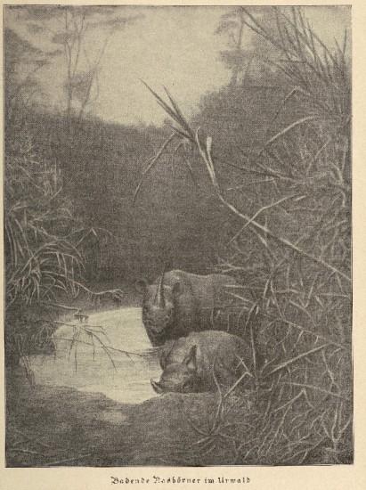 Rhino bathing in jungle