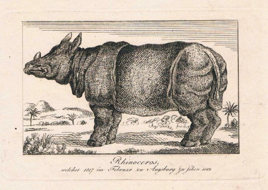 Tourniaire rhino 1817