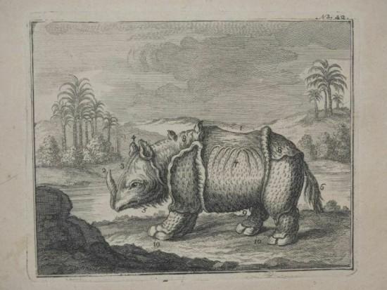 an unusually hairy rhino