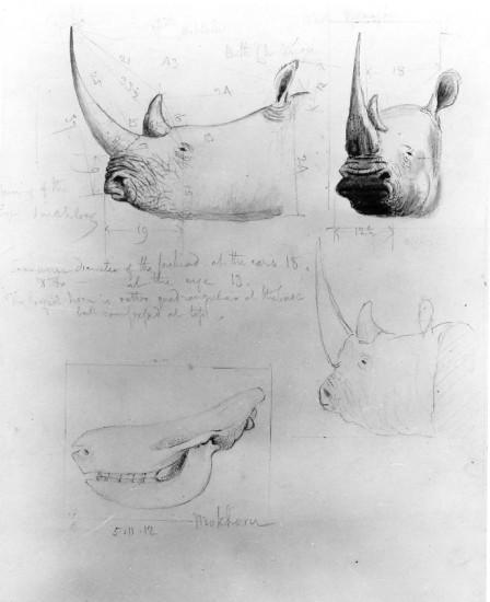 Burchell sketch 020