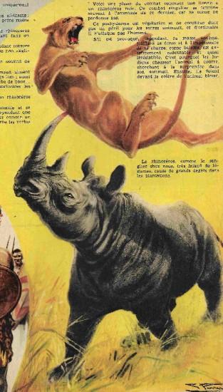 Spirou 1956 Lion Attack
