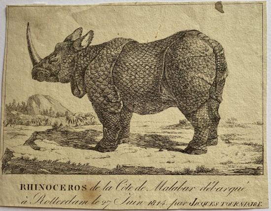 Tourniaire rhino