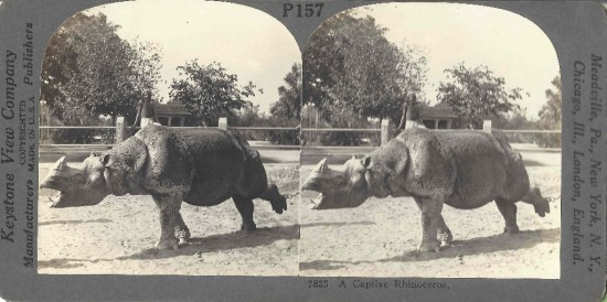 Stereo photo by Keystone View Company: Meadville