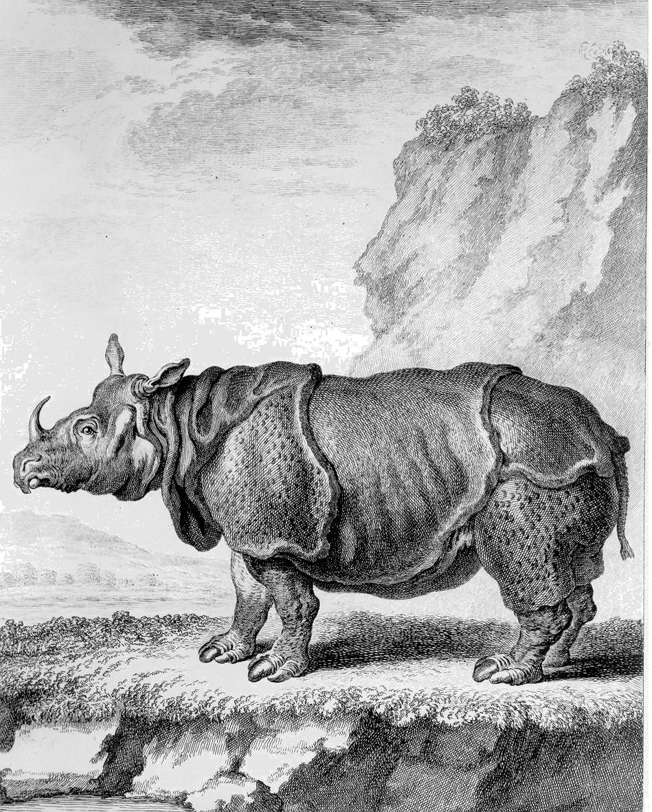 Buffon 1764