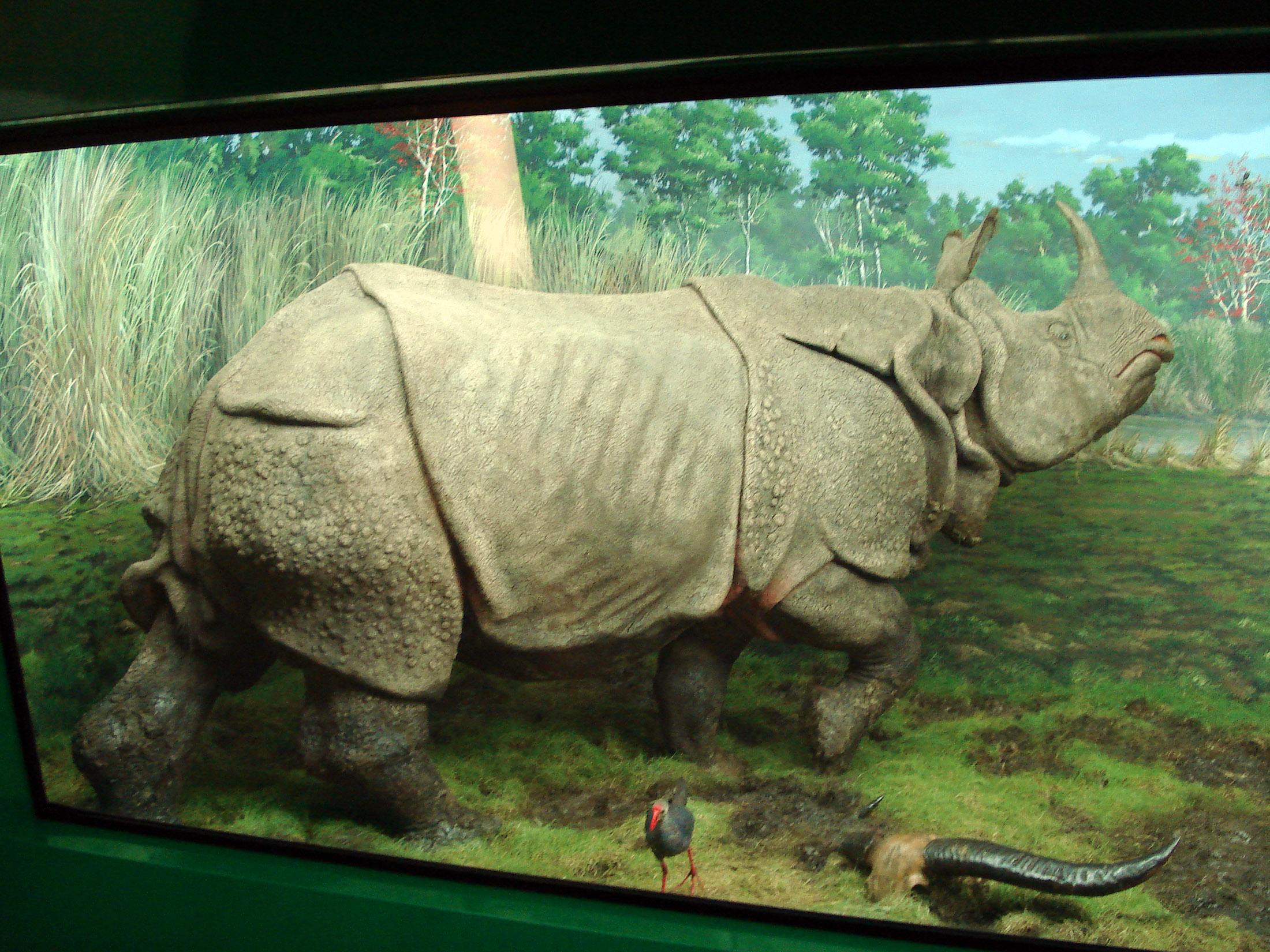 Indian Dioramas http://www.rhinoresourcecenter.com/images/Indian-Rhino-Diorama_i1195768653.php?type=tax_images&taxon=6&sort_order=desc&sort_key=year