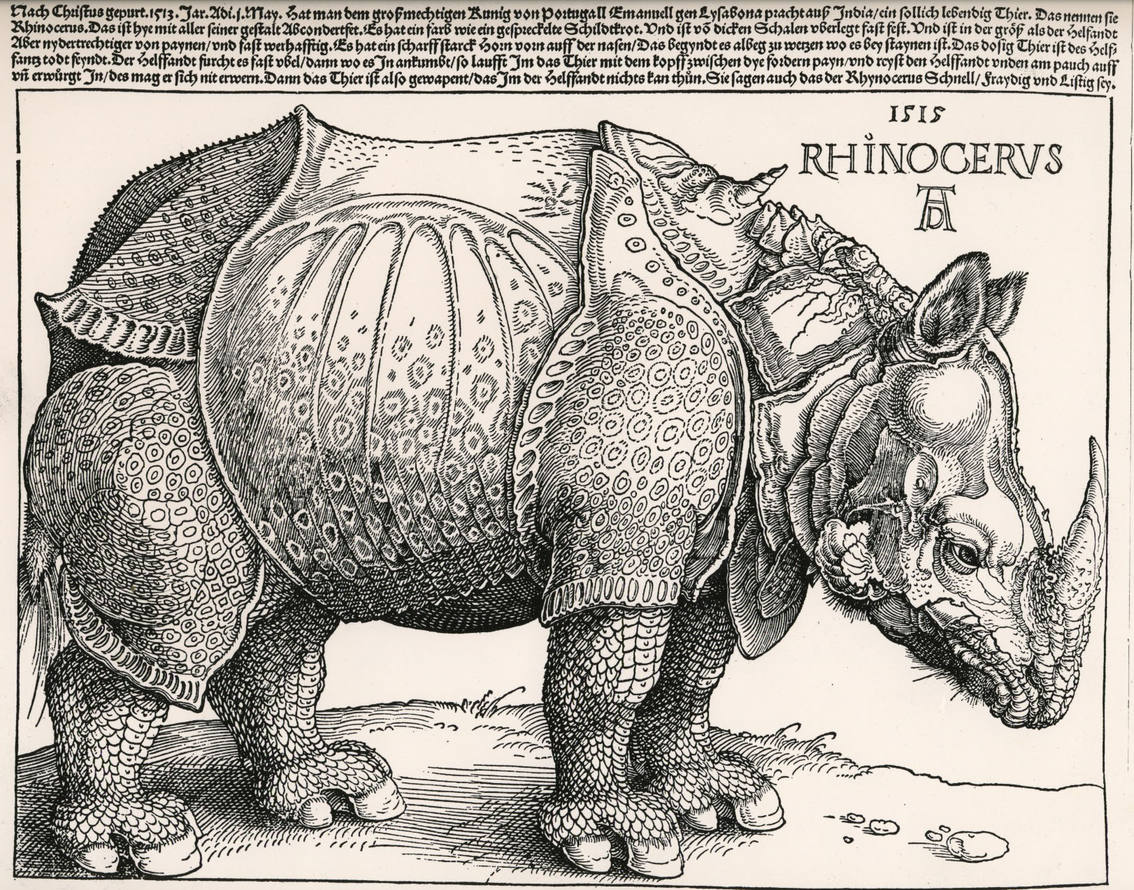h2g2 - The Rhinoceros - Edited Entry