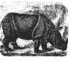 Buffon 1876