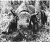 Karonga 1910