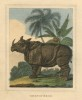 anonymous 1827 Javan rhino
