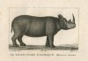 Black African rhinoceros By J.G....