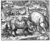 Thevet 1575