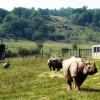 Wilds 2009