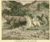 Rhino chase