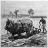 Rhinoceros ploughing