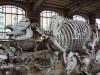 Versailles rhino