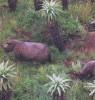 Rhinoceroses in Thanda Reserve, Hluhluwe, Zululand
