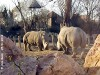 Budapest white rhino