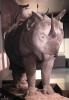 Rhino with additional horn