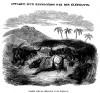 Howitt Attaque du rhinoceros