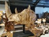 A Sumatran woody rhinoceros skull